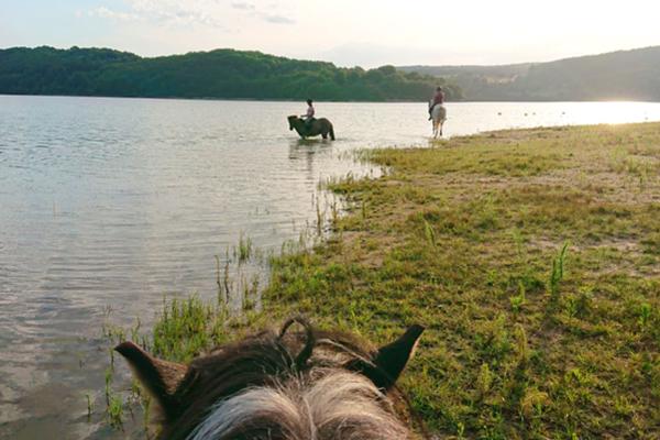 Chevaux islandais au lac du Laouzas (Tarn)