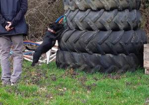 activité canine chien